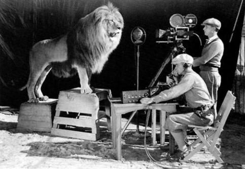 Um câmera gravando o rugido do leão para a vinheta da MGM